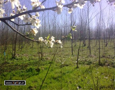 تصاویری از طبیعت روستای کرکان بندرانزلی سری (3)